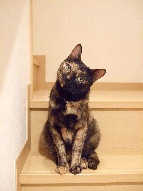 階段かしげ猫
